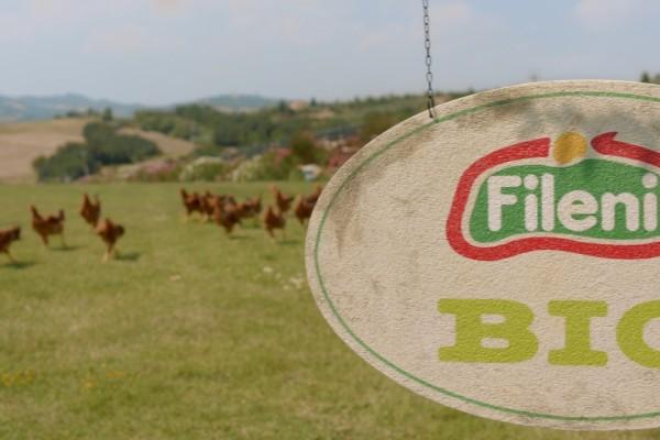 Fileni-Bio-Logo