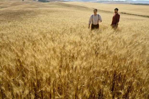Nuovo spot pubblicitario per barilla con pierfrancesco favino for Da dove proviene il grano della barilla