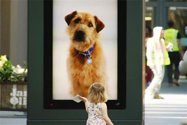 Battesea-Dogs-Home