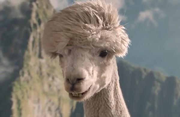 enigmistica-alpaca