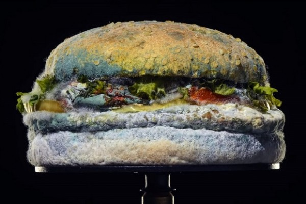 burgerking-panino-ammuffito